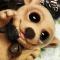 Купить Флоризель, Другие животные, Зверята, Куклы и игрушки ручной работы. Мастер Юлия Карминова (Gottin) . лемур
