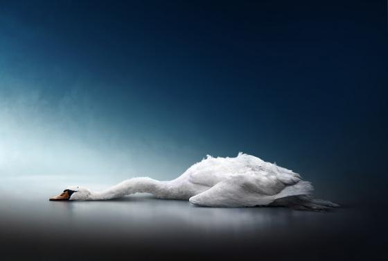 Купить Картинка Мёртвый лебедь, Фотокартины, Картины и панно ручной работы. Мастер   (igaros) . картина