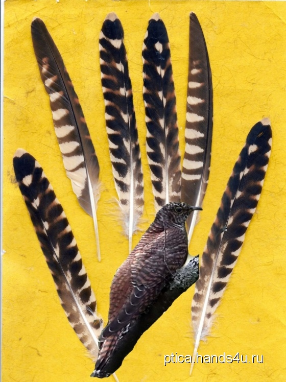 Купить Перья птицы Кукушка, Перья, Другие виды рукоделия ручной работы. Мастер Птица Летящая (Ptica) . природные материалы