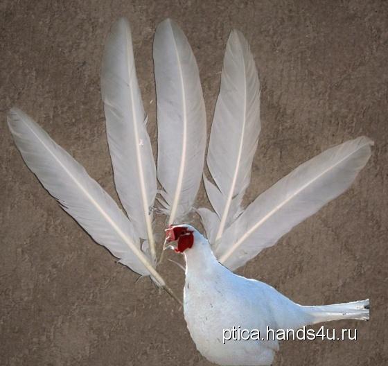 Купить Перья птицы Ушастый фазан (белый), Перья, Другие виды рукоделия ручной работы. Мастер Птица Летящая (Ptica) . натуральные перья