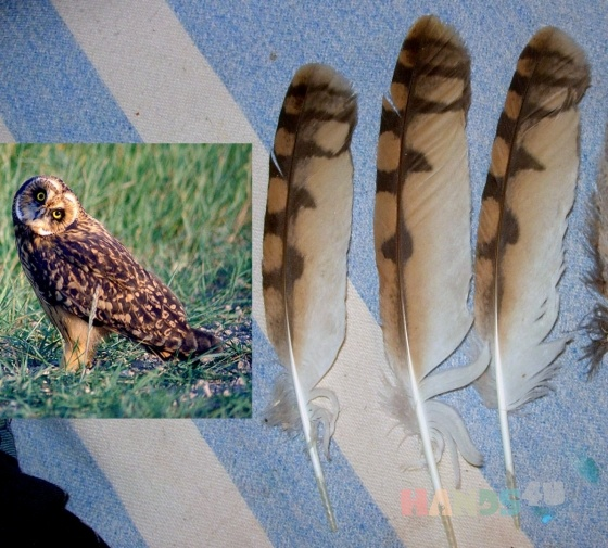 Купить Перья птицы Болотная сова, Перья, Другие виды рукоделия ручной работы. Мастер Птица Летящая (Ptica) . натуральные перья