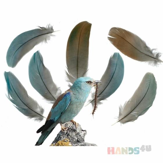 Купить Перья птицы Сизоворонка, Перья, Другие виды рукоделия ручной работы. Мастер Птица Летящая (Ptica) . натуральные перья
