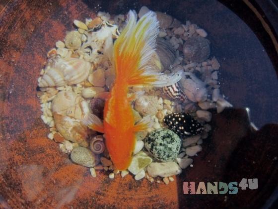 Купить Золотая рыбка в пиале, Сувениры и подарки ручной работы. Мастер Марина Калиновская (Aeroart) . 3d фигурки