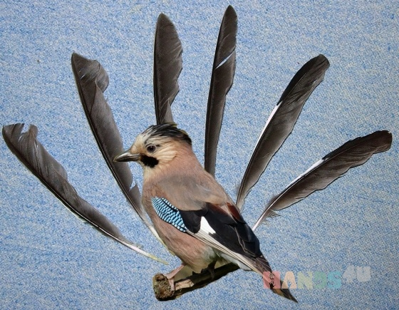 Купить Перо птицы Сойка, Перья, Другие виды рукоделия ручной работы. Мастер Птица Летящая (Ptica) . натуральные перья