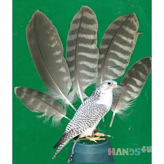 Купить Перья птицы Кречет-сапсан, Перья, Другие виды рукоделия ручной работы. Мастер Птица Летящая (Ptica) . перо