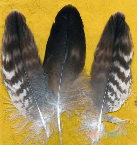 Купить Перья для рукоделия - 11, Перья, Другие виды рукоделия ручной работы. Мастер Птица Летящая (Ptica) . перья