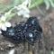 Купить Брошь бабочка вышитая бисером пайетками камнями Черный Бражник, Вышивка, Бисер, Броши, Украшения ручной работы. Мастер Яна Новикова (Ya-na) . бабочка из бисера