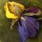 Купить Цветы из кожи Брошь заколка ИРИС АНЖЕЛЛО, Кожаные, Броши, Украшения ручной работы. Мастер Ирина Влади (IrinaVladi) . цветы из кожи
