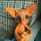 Купить Одинокий лис, Другие животные, Зверята, Куклы и игрушки ручной работы. Мастер Светлана  (Lana68) . лисичка