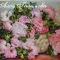 Купить Картина Облако воздушных роз, Картины цветов, Картины и панно ручной работы. Мастер Алсу Галимова (AlsuGalimova) . атласная  лента