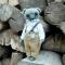 Купить Мишка Тедди джентельмен, Мишки, Мишки Тедди, Куклы и игрушки ручной работы. Мастер Анна Гончарова (kudelia) . интерьерный мишка