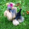Купить Войлочная собака йоркширский терьер, Собаки, Зверята, Куклы и игрушки ручной работы. Мастер Елена Минаева (elemina) . 100 пр шерсть