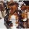 Купить Мыло ручной работы Кофейно-шоколадное пирожное с кокосом, Сладости, Мыло, Косметика ручной работы. Мастер Ирина Литвинова (Elf-House) . мыло сувенирное