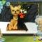 Купить кошки, Подарки к праздникам ручной работы. Мастер Ирина Григорьева (berina) . кошки любовь шерсть подарок валяние