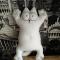 Купить Кот Саймон, Коты, Зверята, Куклы и игрушки ручной работы. Мастер Светлана  (Lana68) . саймон