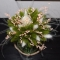 Купить Композиция из сухоцветов , Сухоцветы, Интерьерные композиции, Цветы и флористика ручной работы. Мастер Анна Свистунова (Sdelanrukami) .