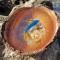 Купить Синяя рыбка нарисована в кокосе, Картины и панно ручной работы. Мастер Марина Калиновская (Aeroart) . рыба