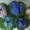 Купить Фиалки , Бисерные, Цветы, Цветы и флористика ручной работы. Мастер Darya Dyndina (Darya) .