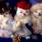 Купить Снеговик, Мультяшные, Сказочные персонажи, Куклы и игрушки ручной работы. Мастер Надежда Федорова (lisichka) .