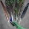 Купить Перья птицы Павлин ( пуховые), Перья, Другие виды рукоделия ручной работы. Мастер Птица Летящая (Ptica) . натуральные перья
