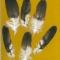 Купить Перья для рукоделия - 3, Перья, Другие виды рукоделия ручной работы. Мастер Птица Летящая (Ptica) . натуральные перья