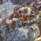 Купить Браслеты Осень, Полудрагоценные камни, Камни и жемчуг, Браслеты, Украшения ручной работы. Мастер Эльмира  (Elmira) . браслеты из камней