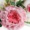 Купить Брошь роза Летний сон Цветы из ткани, Текстильные, Броши, Украшения ручной работы. Мастер Лариса Шушпанова (LShushpanova) . брошь в форме цветка