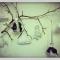 Купить новогодние текстильные игрушки, Новогодний интерьер, Новый год, Подарки к праздникам ручной работы. Мастер Alina Khayrova (took-took) .