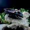 Купить Кулон Череп дракона 8144, Кость, Кулоны, подвески, Украшения ручной работы. Мастер Ольга Базан (CuNature) .
