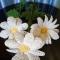 Купить Вязаные ромашки, Вязаные, Букеты, Цветы и флористика ручной работы. Мастер   (Aveliya) . большие ромашки