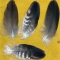 Купить Перья для рукоделия - 11, Перья, Другие виды рукоделия ручной работы. Мастер Птица Летящая (Ptica) .