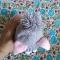 Купить Розовый кот, Коты, Зверята, Куклы и игрушки ручной работы. Мастер Марина Мандрик (Mamaarseniya) . розовый котик