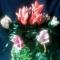 Купить Цветы, Цветы и флористика ручной работы. Мастер Светлана Кислицына (Lanakiss) .