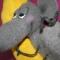 Купить Мечты сбываются))), Мыши, Зверята, Куклы и игрушки ручной работы. Мастер   (Katerinka) . войлочная игрушка