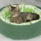 Купить Лежанка для кошки двойная, Аксессуары для кошек, Для домашних животных ручной работы. Мастер Иоанна Урбан (IvannaUrban) . кошка