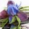 Купить Брошь цветок Ирис Волшебный, Текстильные, Броши, Украшения ручной работы. Мастер Лариса Шушпанова (LShushpanova) . брошь заколка цветок