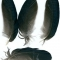 Купить Перья птицы Грач, Перья, Другие виды рукоделия ручной работы. Мастер Птица Летящая (Ptica) .