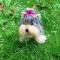 Купить Войлочная собака йоркширский терьер, Собаки, Зверята, Куклы и игрушки ручной работы. Мастер Елена Минаева (elemina) .