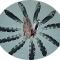 Купить Перья птицы Большой пёстрый дятел, Перья, Другие виды рукоделия ручной работы. Мастер Птица Летящая (Ptica) . натуральные перья