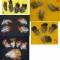 Купить Перья птицы Золотой фазан, Перья, Другие виды рукоделия ручной работы. Мастер Птица Летящая (Ptica) .