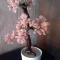 Купить дерево Весна, Деревья, Цветы и флористика ручной работы. Мастер Светлана Орлова (Totochka) . весна
