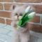 Купить Кот вязаный Спешу поздравить Вас, Коты, Зверята, Куклы и игрушки ручной работы. Мастер Анна Воробьева (Vorobyeva72-) . котик