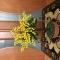 Купить Яркое дерево мимозы из бисера, Элементы интерьера, Для дома и интерьера ручной работы. Мастер Ирина Долгополова (Biserok) . авторский подарок ручной  работы