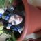 Купить Брошь Бохо, Смешанная техника, Броши, Украшения ручной работы. Мастер Наташа Облогина (Natasha898) . полимерная глина