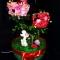 Купить Топиарий Дерево любви, Подарки для влюбленных, Подарки к праздникам ручной работы. Мастер Ксения Кочергина (kseniya) .