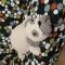 Купить Оригинальная подушка-мопс, Вязаные, Подушки, Текстиль, ковры, Для дома и интерьера ручной работы. Мастер Надежда Ермакова (nscompany77) .