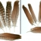 Купить Перья птицы Куропатка, Перья, Другие виды рукоделия ручной работы. Мастер Птица Летящая (Ptica) .
