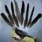 Купить Перья птицы Грач, Перья, Другие виды рукоделия ручной работы. Мастер Птица Летящая (Ptica) . натуральные перья