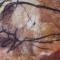 Купить Картина Наскальная живопись Носороги, Животные, Картины и панно ручной работы. Мастер Olga Litvinova (olli-felt) . интерьерная картина