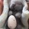 Купить Малыш зайка, Куклы и игрушки ручной работы. Мастер Анна Свистунова (Sdelanrukami) . валяная  игрушка